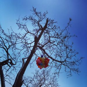 To get over any difficult period of time you will need a colorful, hopeful heart. The icy tree branches with no leaves represent the harshness of life whilst the colorful balloons represent a heart full of hopes and smiles. Hope is the main survival strategy that will eventually lead to blooming.